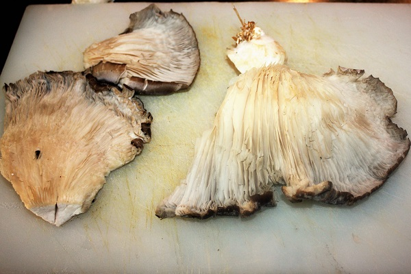 pleurotus gratinati al parmigiano